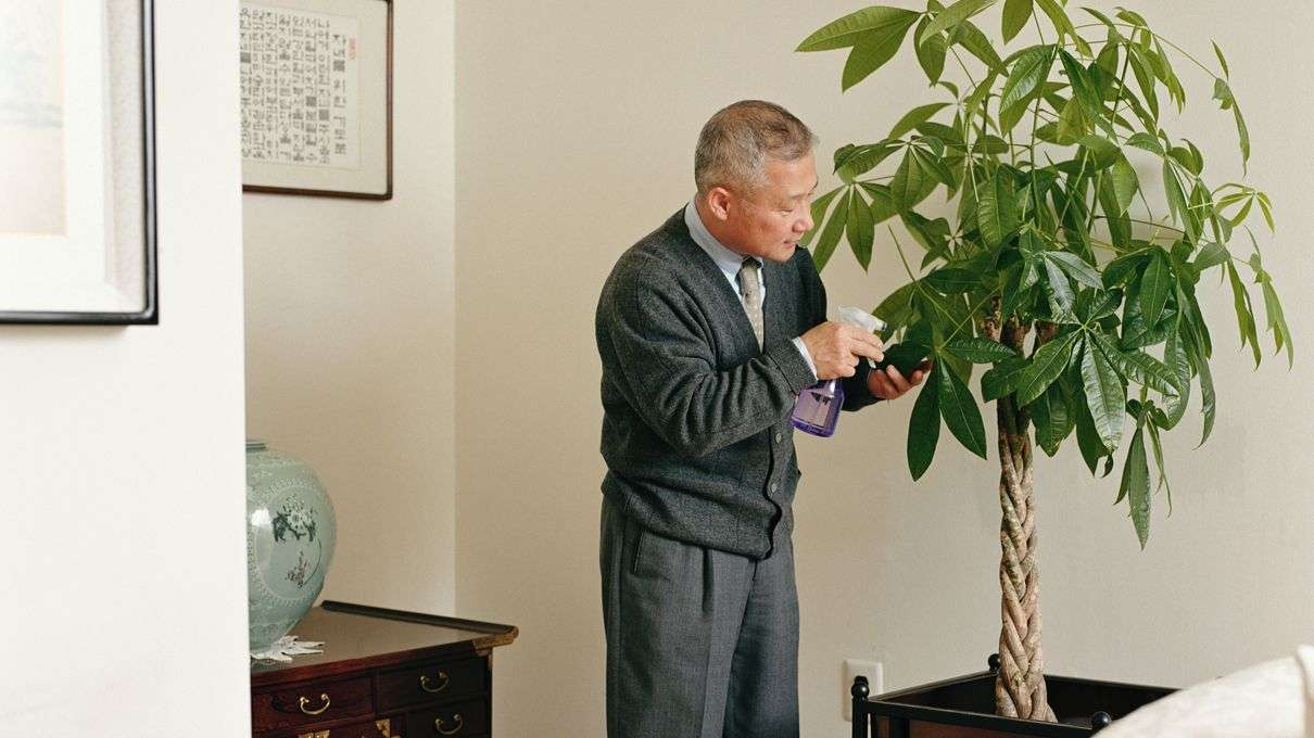Historically Houseplants Were For Rich Now Chinese