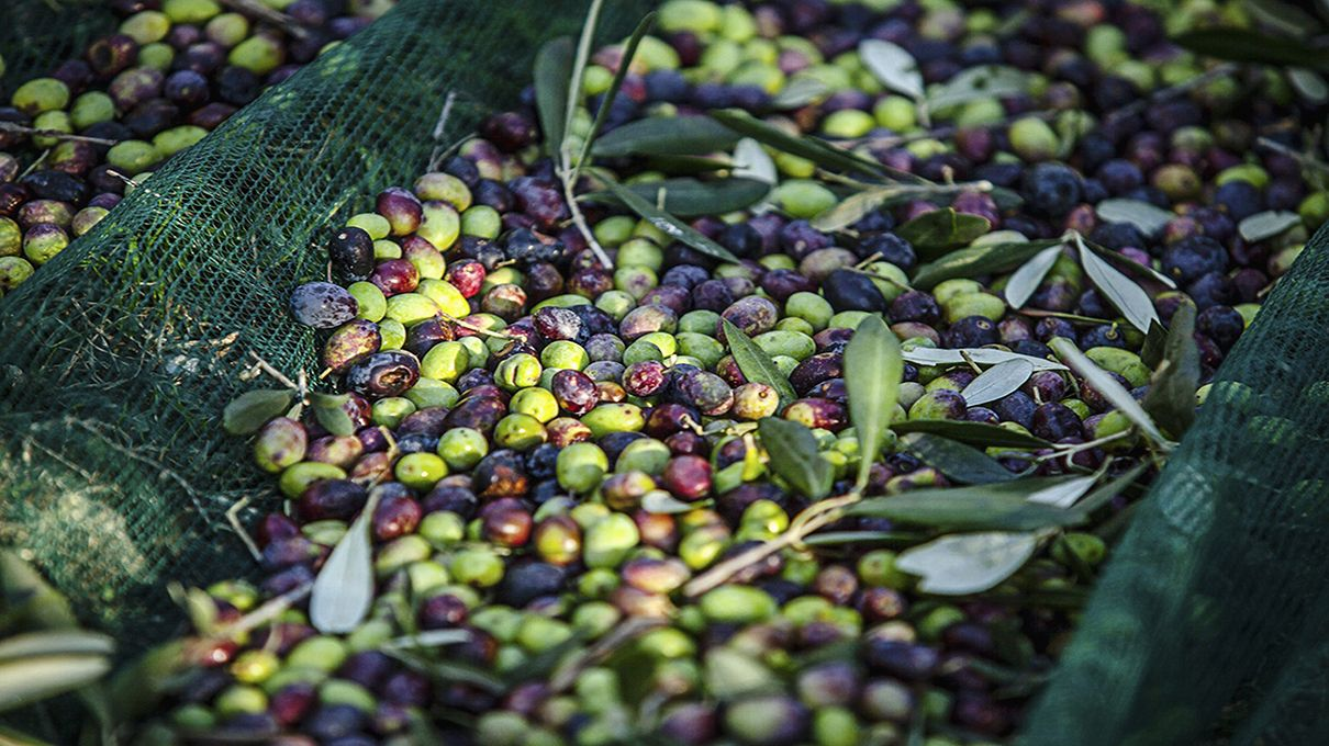 A Worldwide Olive Oil Shortage May Be Looming