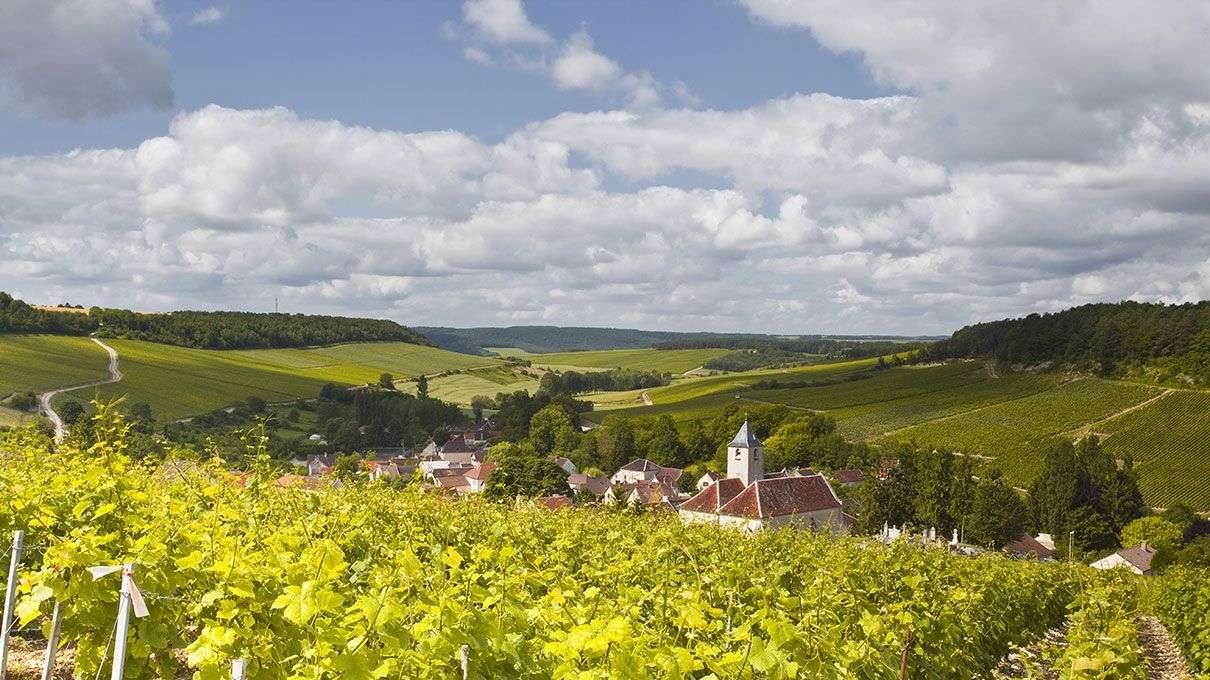 Climate change affecting viticulture