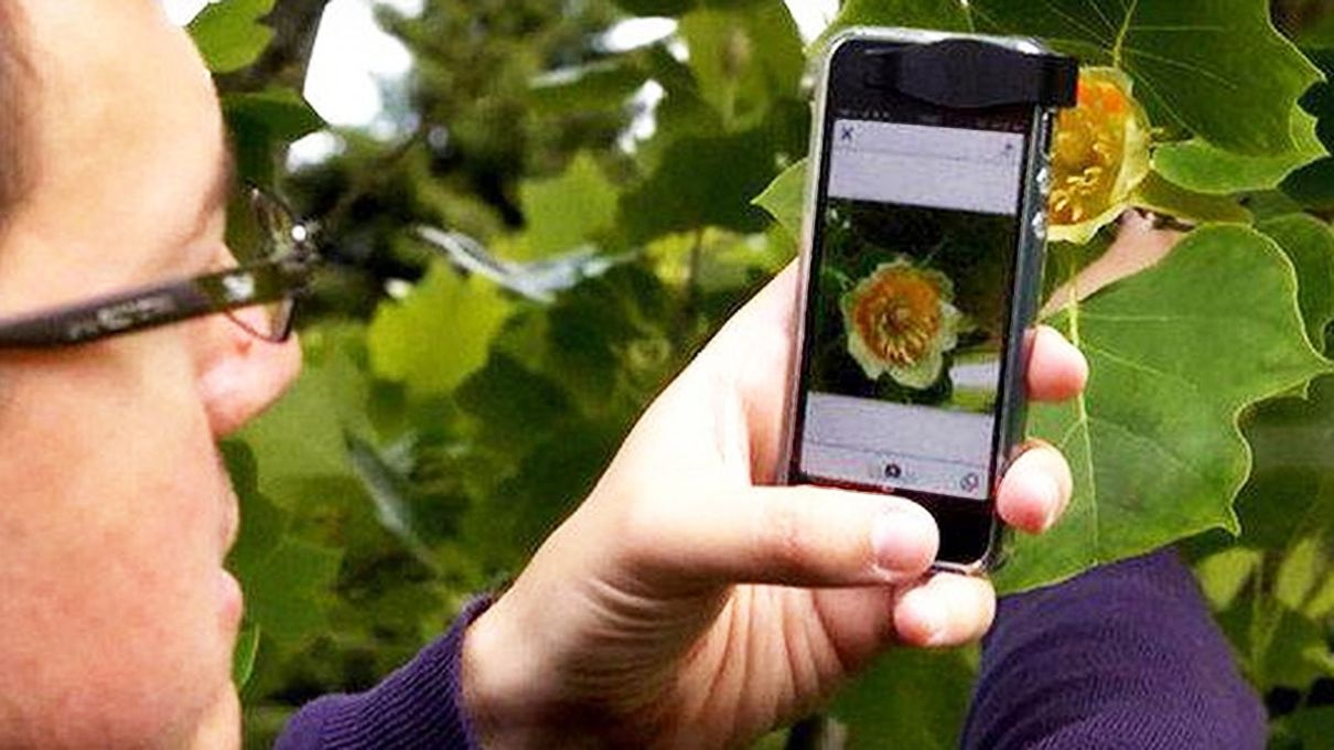 Clever App Uses Smartphone Camera to Identify Plant Species