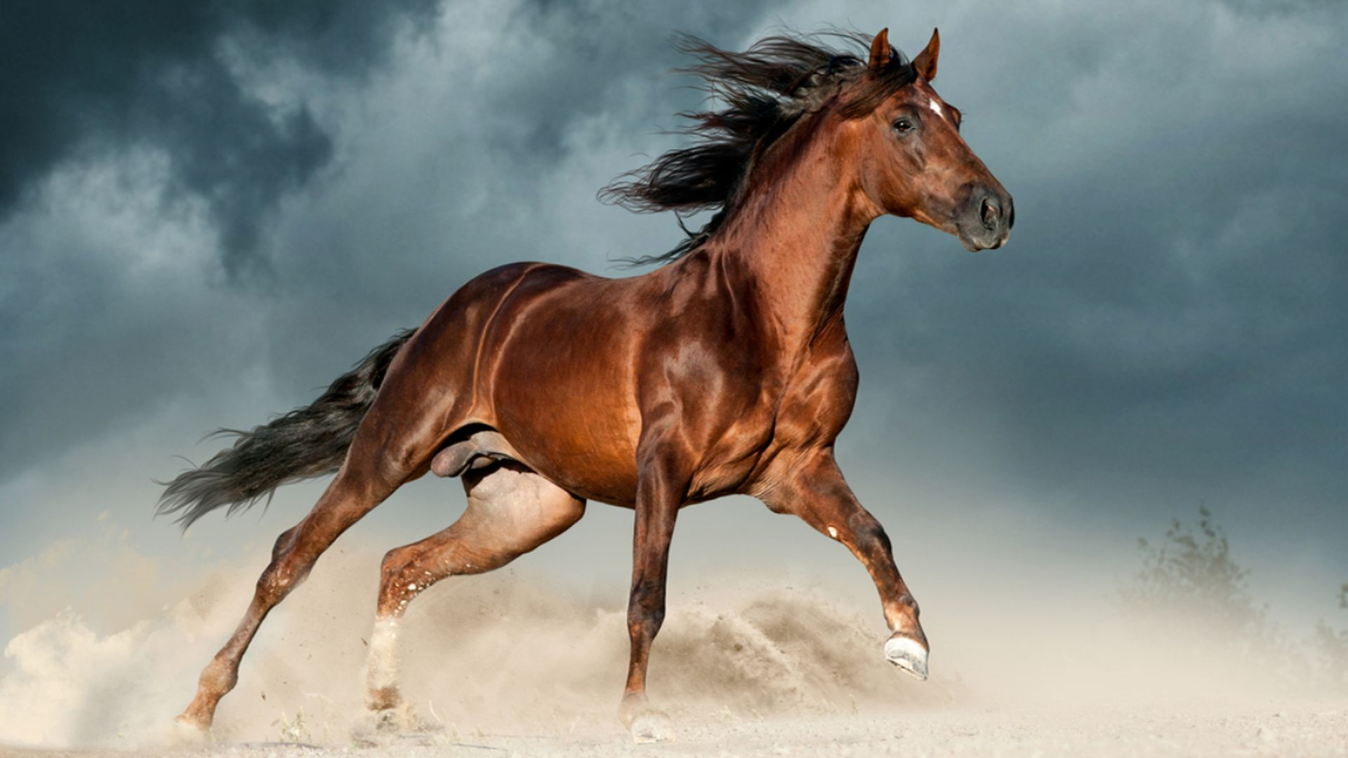 Howstuffworks: Can You Pass This Hard Horse Breed