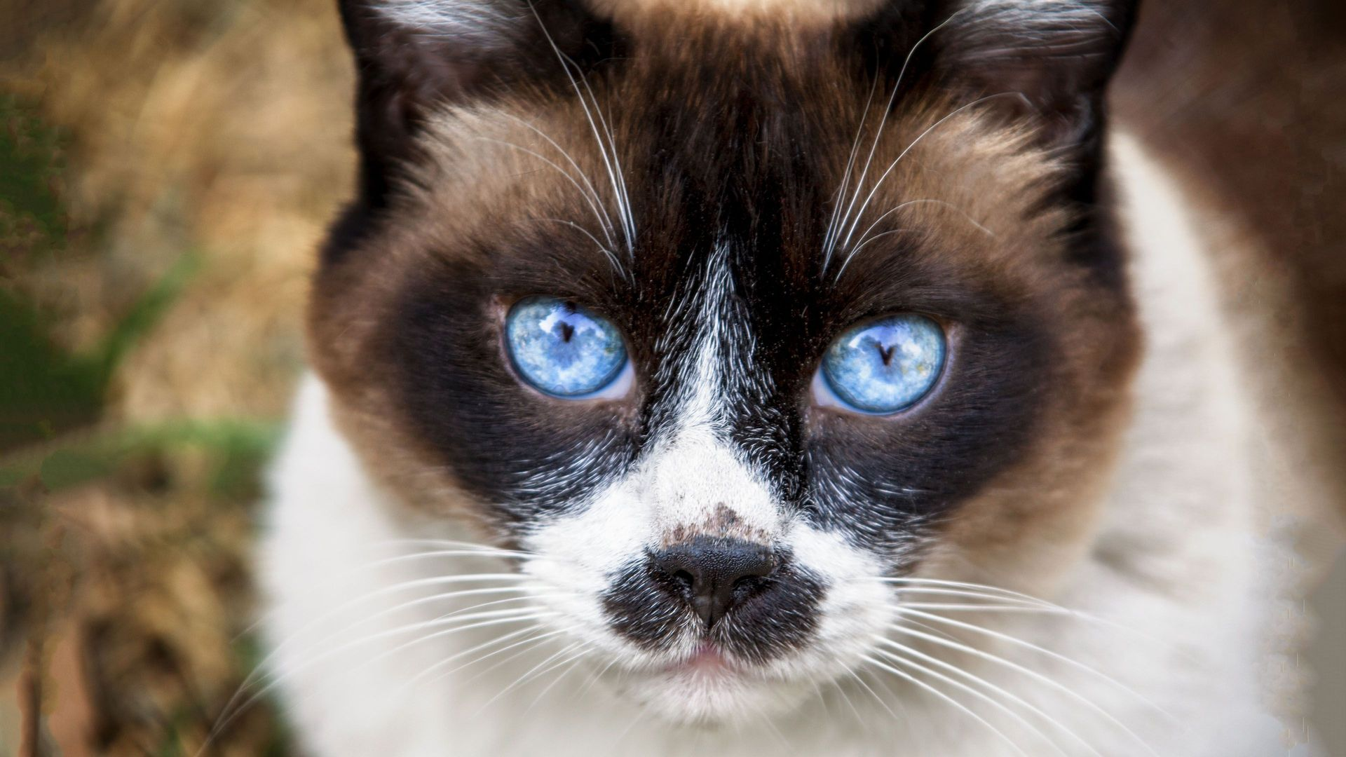Howstuffworks: Can We Guess Which Spirit Animal Is Your