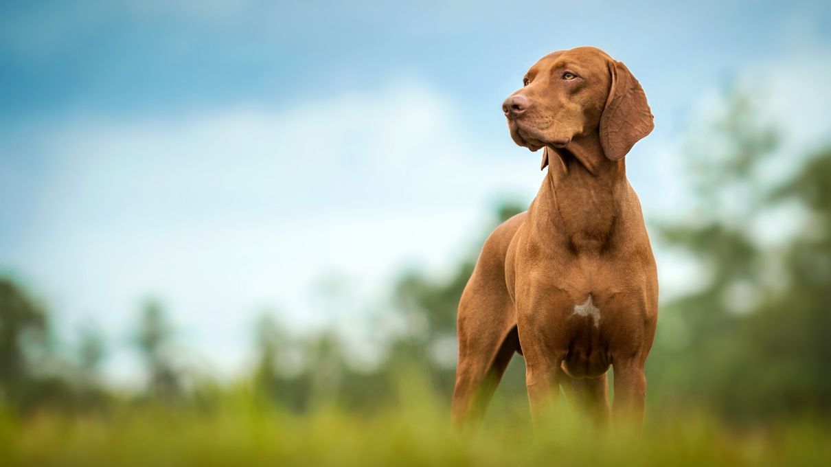 Howstuffworks: Can You Pass This Dog Breed Identification
