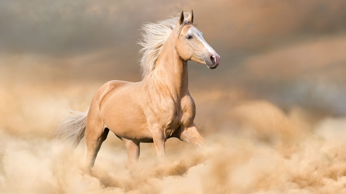 Can You Name The Horse Breeds Shown In Each Of These Photos Zoo