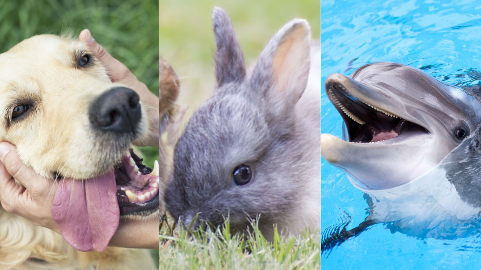 Howstuffworks: Can We Guess Your Favorite Animal?