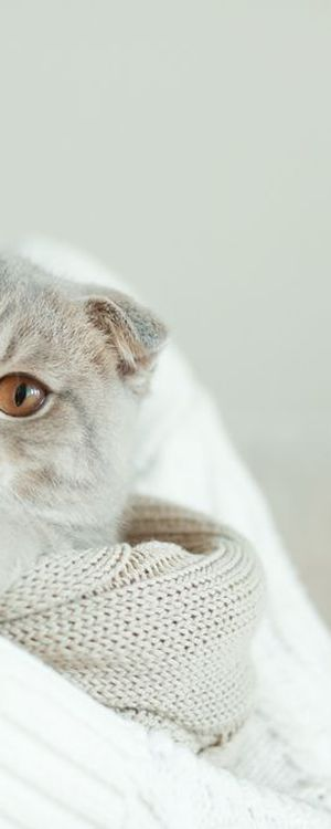 Howstuffworks: Can We Figure Out Your Cat's Name in Just 30