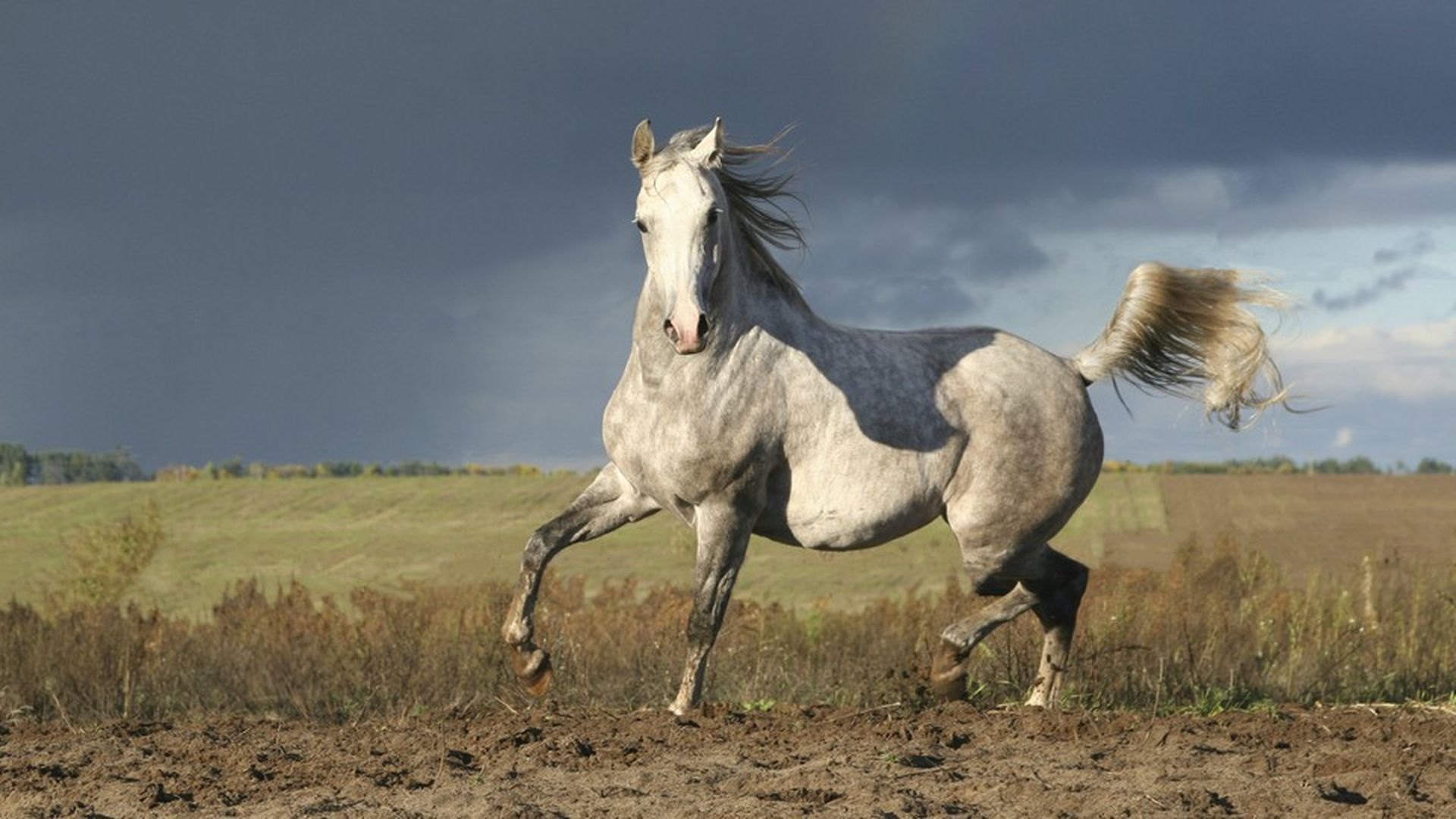 Can You Pass This Hard Horse Breed Identification Quiz Howstuffworks