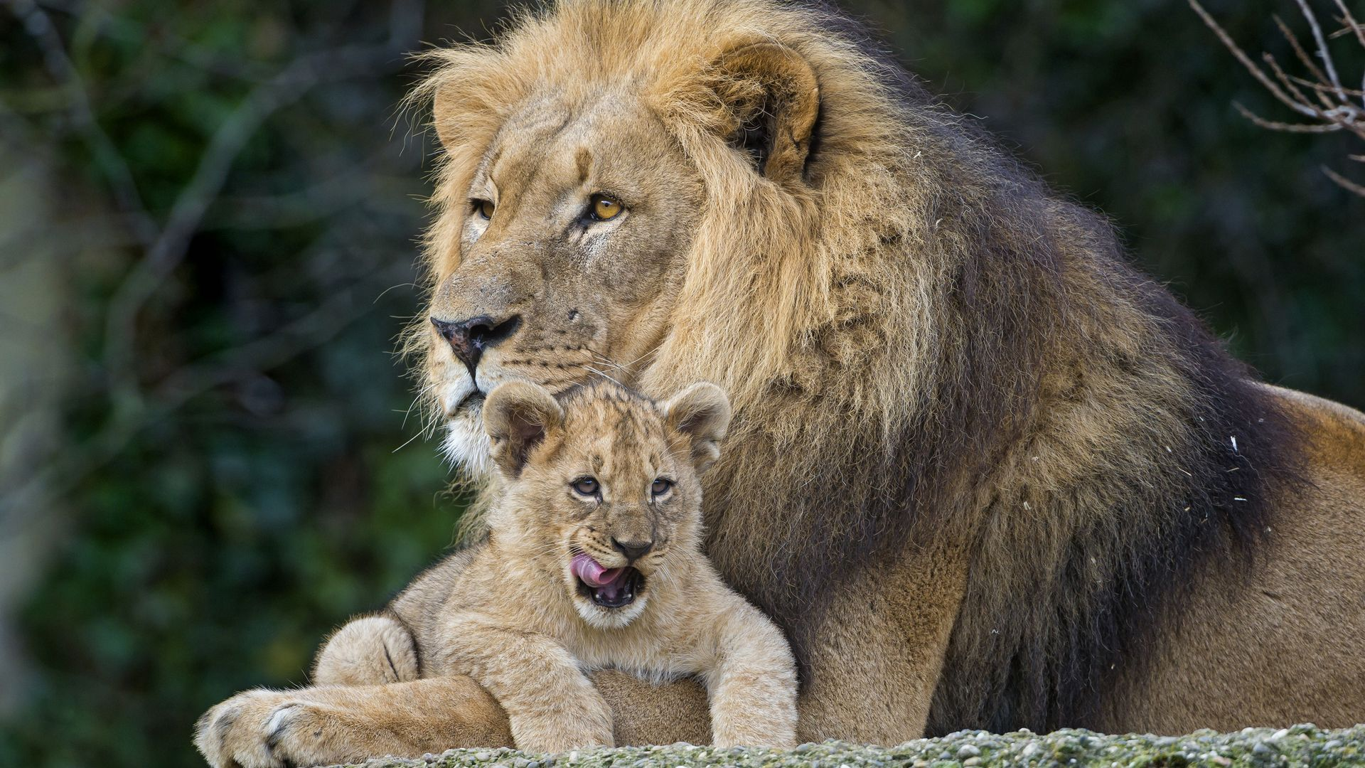 Can You Identify The Animals From The Lion King Howstuffworks