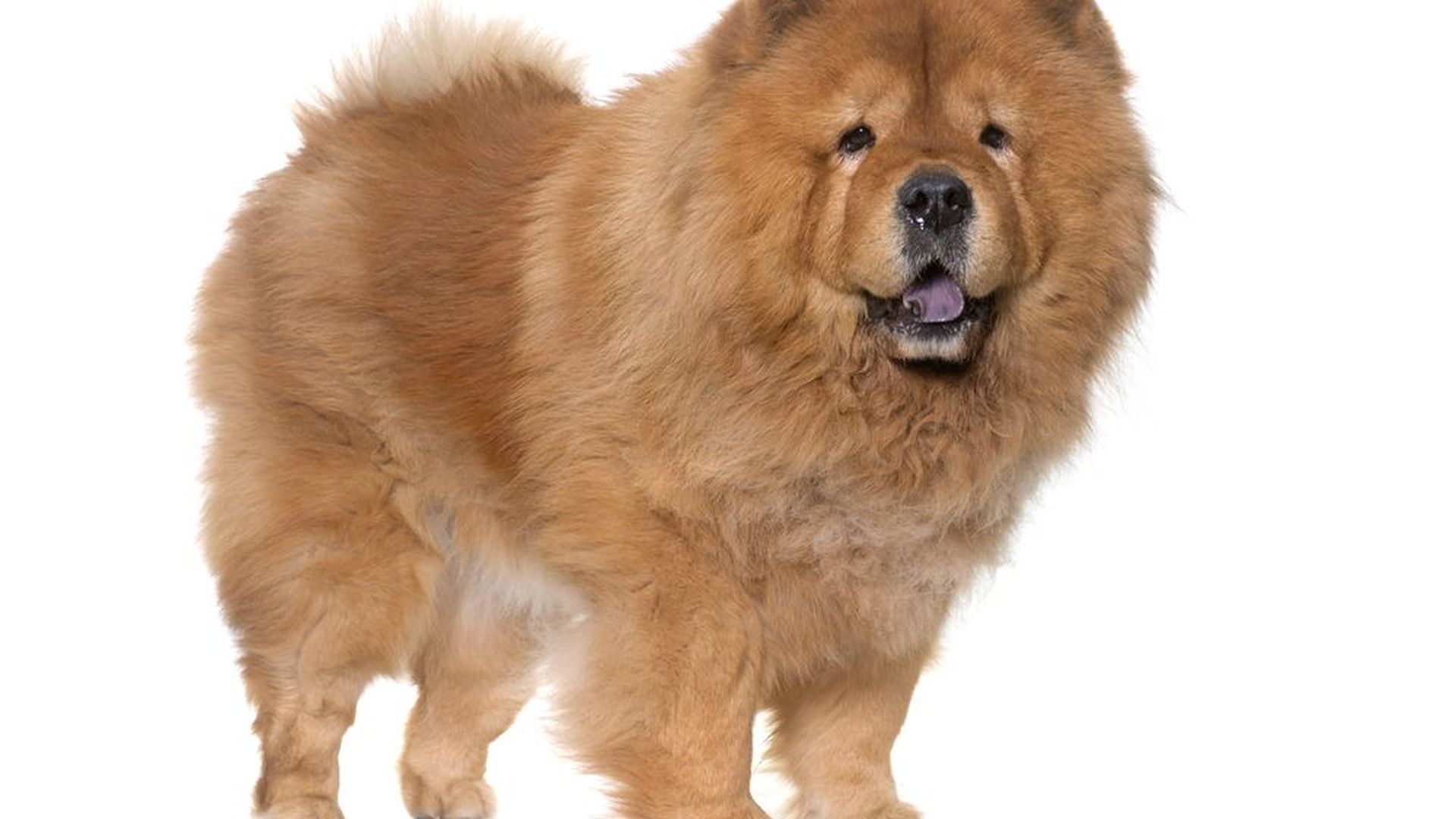 Howstuffworks: Puppies! Can You Identify Each Dog Breed From