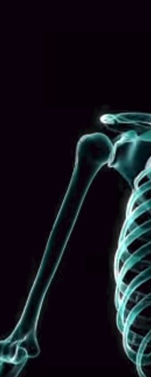 Zoo: Can You Identify These Bones From an X-ray?