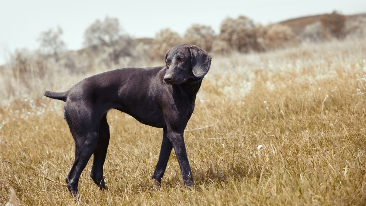 Howstuffworks: Do You Know What These Dog Breeds Were Bred For?
