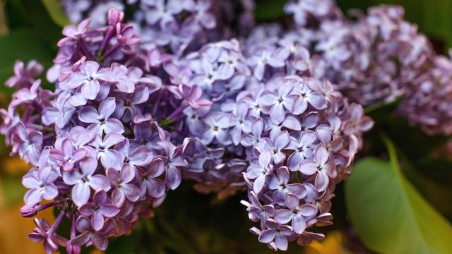Can you identify these spring flowers howstuffworks what kind of flower is this mightylinksfo
